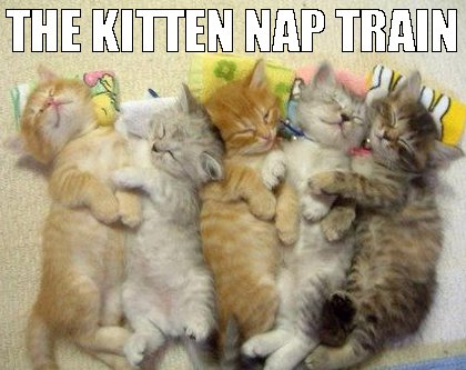 funny cats, meow, cat memes and nap train