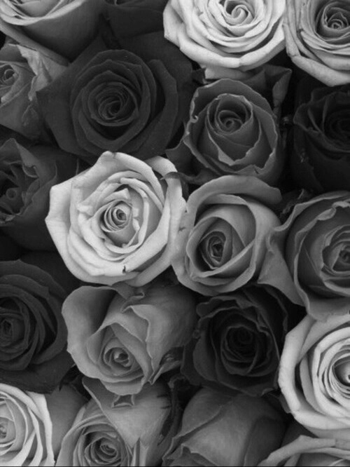 Pictures Of Black And White Background Tumblr Flowers Rock Cafe