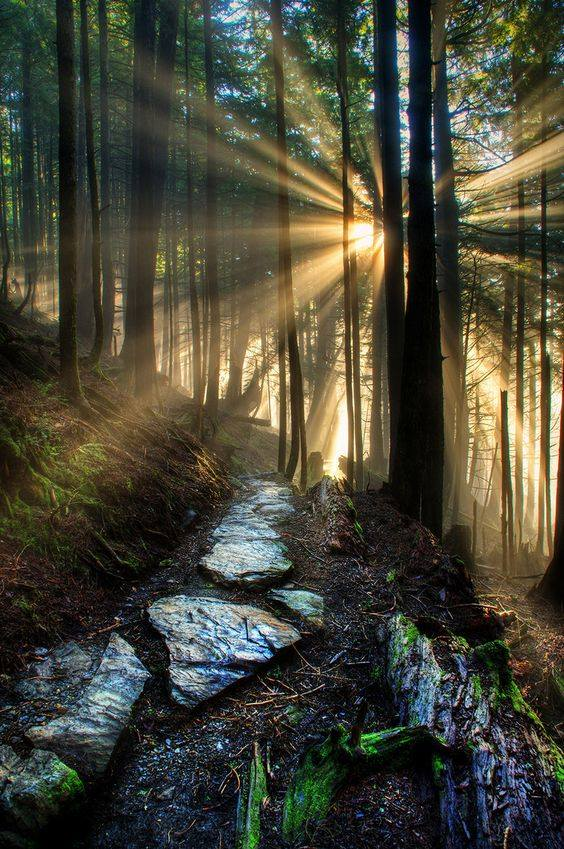 forest, morning, nature, sunshine, travel