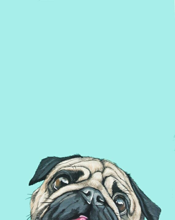 backgrounds, love, pugs, phoneaddict
